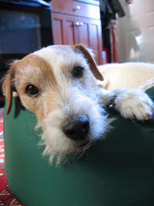 bmoredog